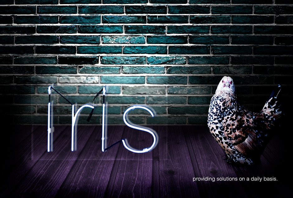 iris | paint distribution | sheep